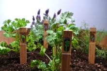 Illuminations Herbs