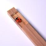 1012_Ladybug