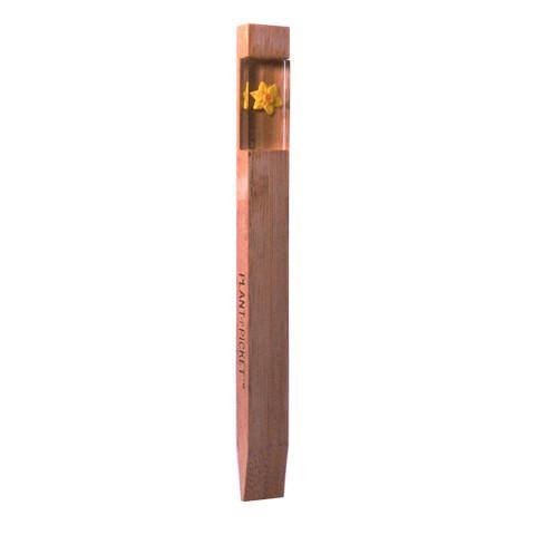 1503_Daffodil